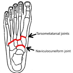 midfoot joints