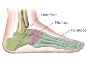 midfootbones